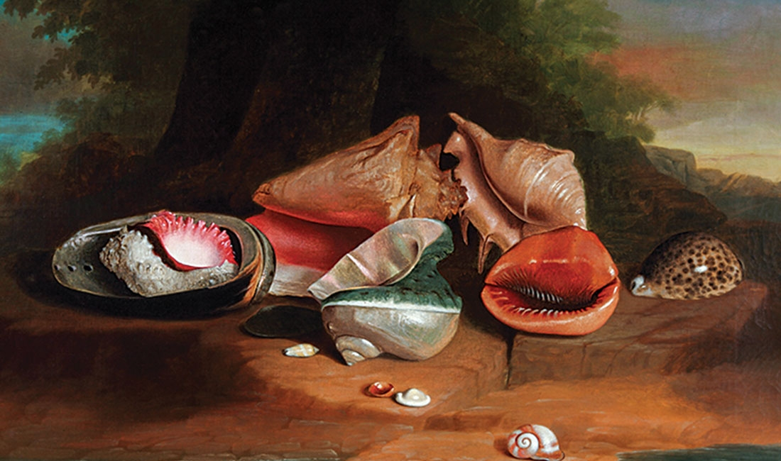 Joseph Biays Ord, Still Life with Shells